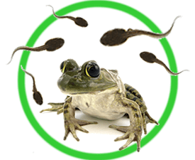 grow a frog instructions