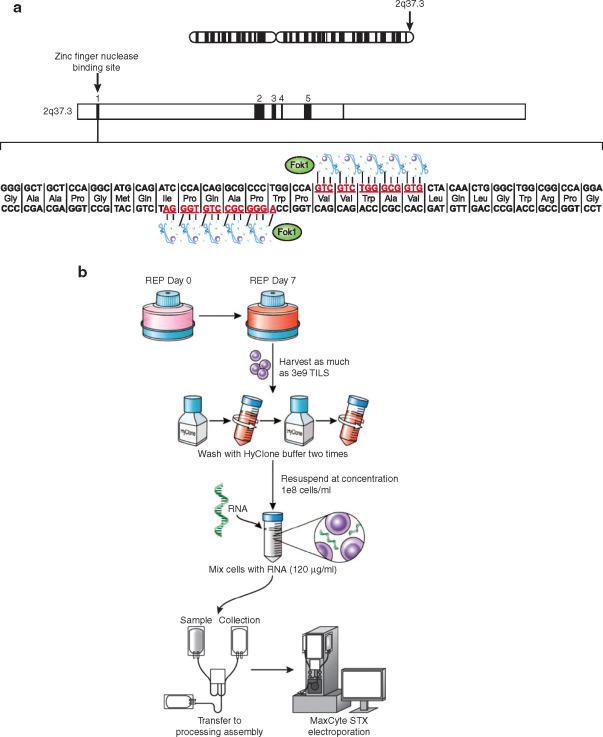nucleic acids research journal instructions to authors
