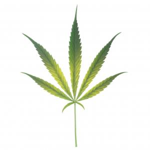 nutrients instructions or vegitative stage cannabis